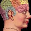 認知機能、注意のネットワーク(ANT)と関係する脳のネットワーク