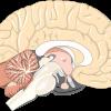 脳のはたらき:かんたん事実で、脳トレ基礎知識