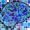 高齢者の脳トレ情報、神経可塑性〜脳は変化する!